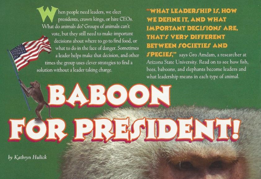 Odyssey Magazine | Baboon for President